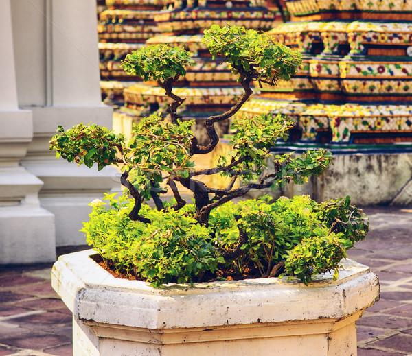 Bonsai fa templom Bangkok Thaiföld természet Stock fotó © PetrMalyshev