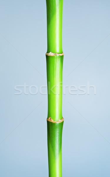 Zöld bambusz szár friss bot szürke Stock fotó © PetrMalyshev