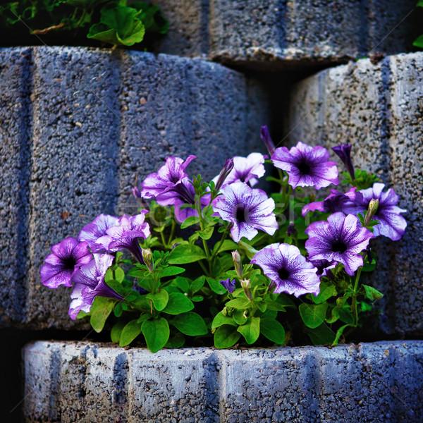 Pierre parterre de fleurs mur fleur herbe beauté Photo stock © PetrMalyshev
