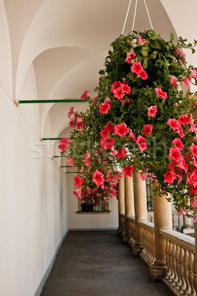 цветы галерея подвесной банка Vintage цветок Сток-фото © PetrMalyshev