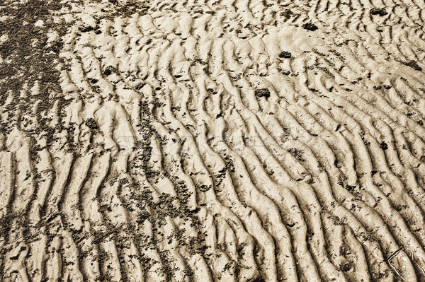 Seabed at Low Tide Stock photo © PetrMalyshev