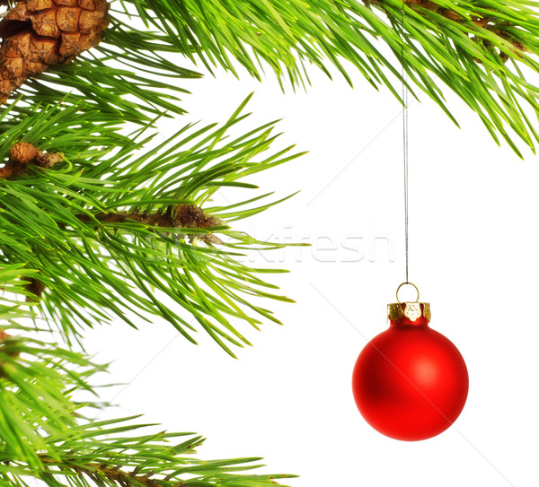 decoration ball on pine branch Stock photo © PetrMalyshev