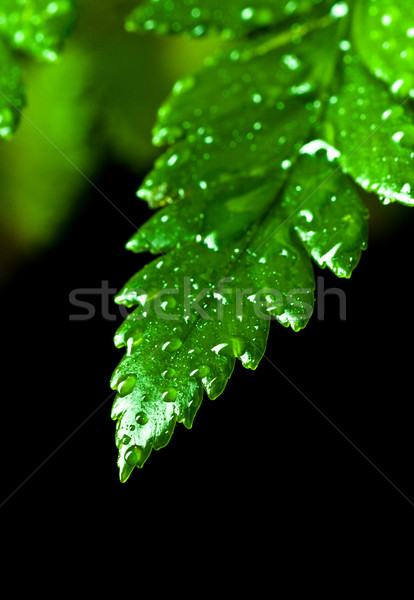 green leaf with water drops  Stock photo © PetrMalyshev