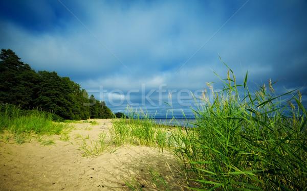 seashore under blue sky Stock photo © PetrMalyshev