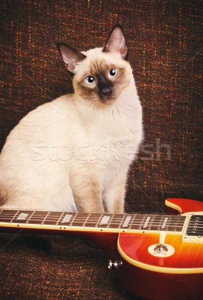 Tailandés gato retrato gris ojos azules guitarra eléctrica Foto stock © PetrMalyshev