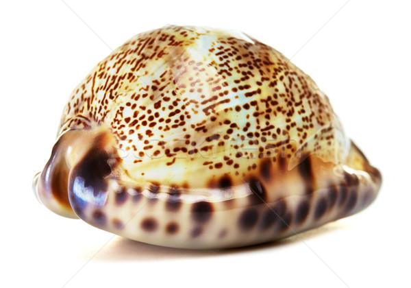 Zee shell mooie geïsoleerd witte strand Stockfoto © PetrMalyshev