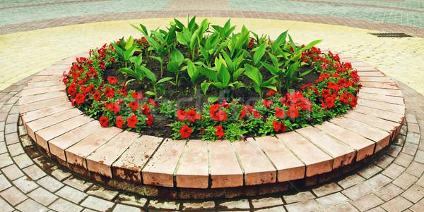 Parterre de fleurs fleurs lumineuses rue herbe fond Photo stock © PetrMalyshev