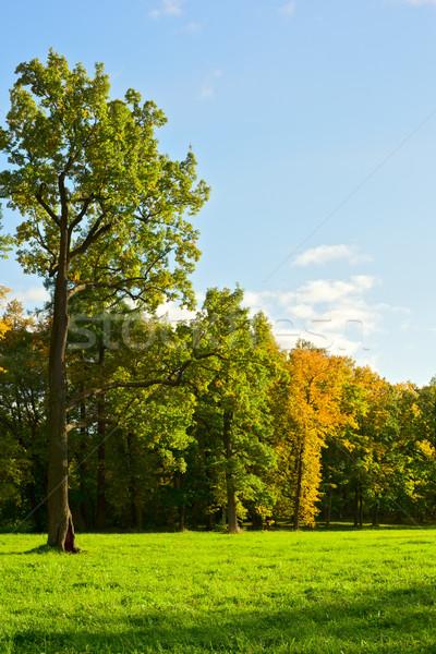 Early Autumn Stock photo © PetrMalyshev