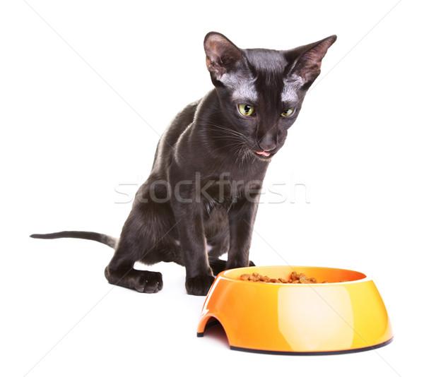 Stockfoto: Korthaar · kat · huisdier · voedsel · gek