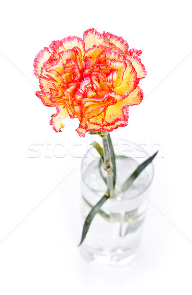 гвоздика стекла изолированный белый воды любви Сток-фото © PetrMalyshev