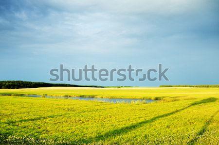 Evening Summer Landscape Stock photo © PetrMalyshev