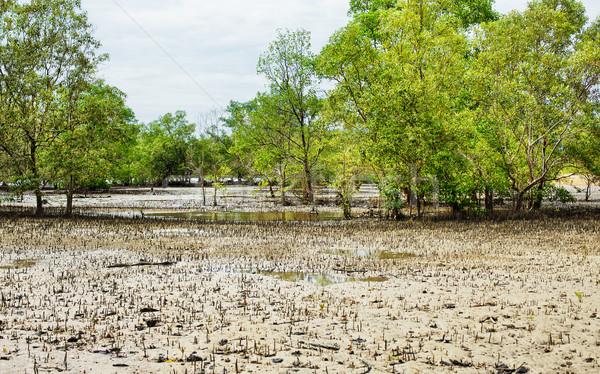 Stock fotó: Thai · mocsár · alacsony · árapály · Thaiföld · víz