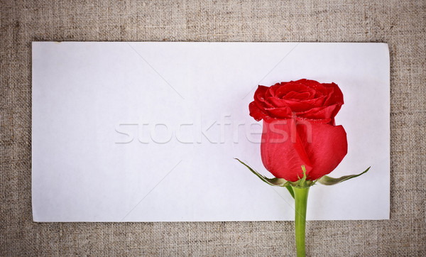 Red Rose and Letter Stock photo © PetrMalyshev