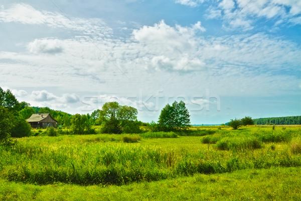 Sunny Meadow Stock photo © PetrMalyshev