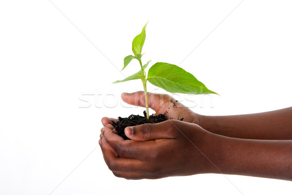 Plant in child hands Stock photo © phakimata