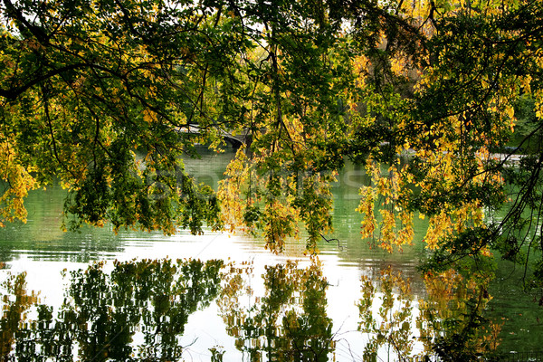 Tree branches hanging over lake Stock photo © phakimata