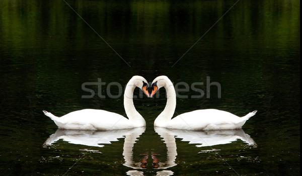 Romántica dos hermosa blanco junto forma de corazón Foto stock © phakimata
