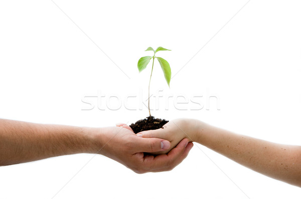 Plant in hands Stock photo © phakimata