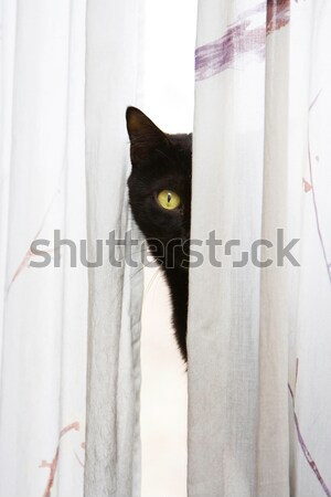 Peeking cat Stock photo © phakimata
