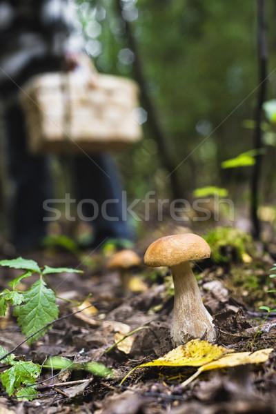 キノコ 森林 浅い フィールド バスケット ツリー ストックフォト © Phantom1311