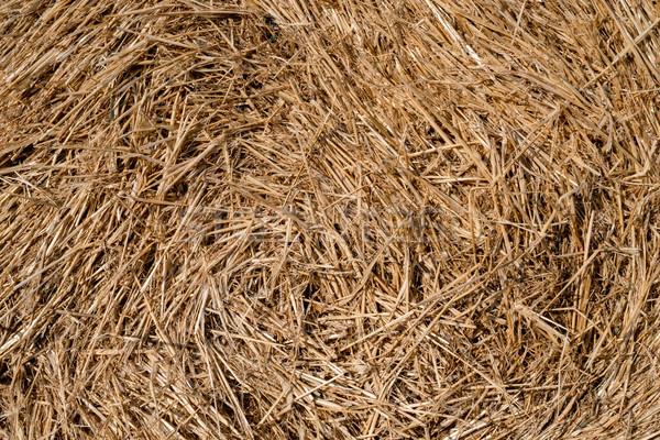 ストックフォト: 乾草 · カット · 草 · アップ
