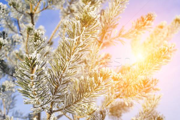 дерево Blue Sky мелкий небе лес Сток-фото © Phantom1311