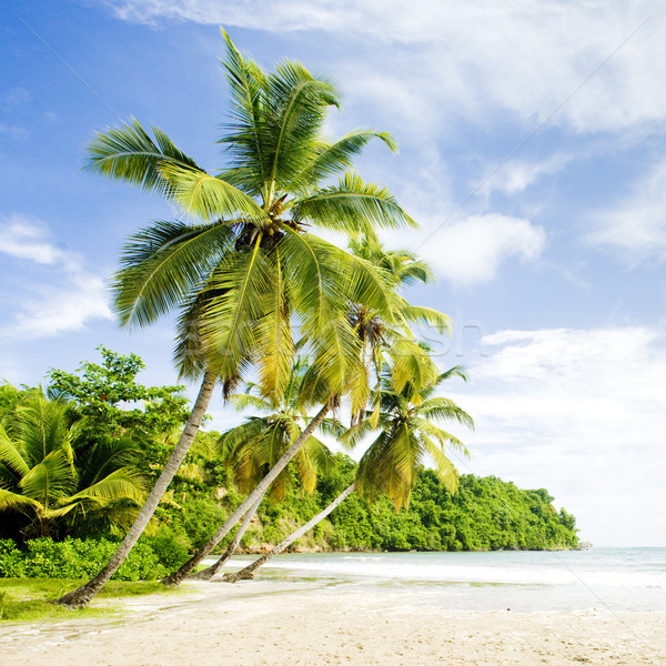 Stockfoto: La · Grenada · boom · landschap · zee · zomer