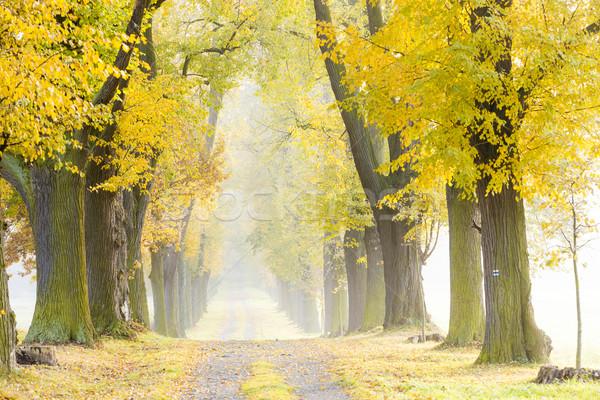 Callejón árbol otono planta camino Foto stock © phbcz