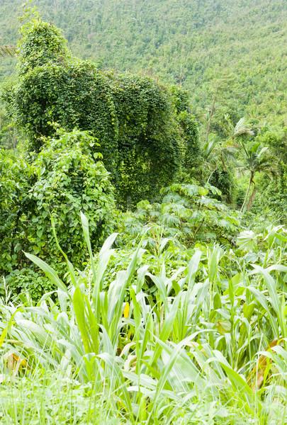 Park Grenada bos landschap reizen planten Stockfoto © phbcz