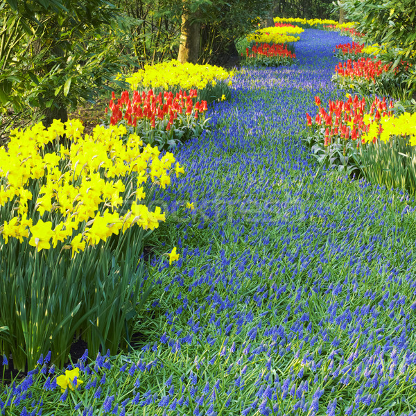 Keukenhof Gardens, Lisse, Netherlands Stock photo © phbcz