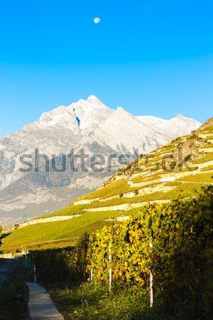 Svájc természet szőlő ősz mezőgazdaság díszlet Stock fotó © phbcz