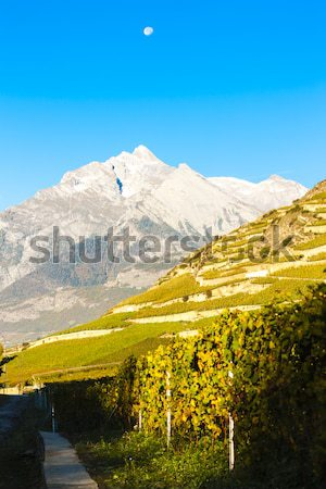 Suíça natureza videira cair agricultura cenário Foto stock © phbcz