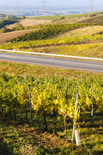view of autumnal vineyards near Jetzelsdorf, Lower Austria, Aust Stock photo © phbcz