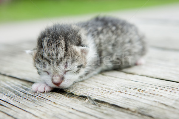 newborn kitten Stock photo © phbcz