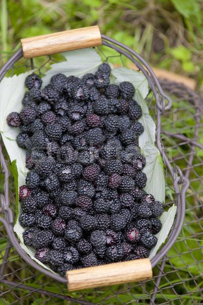 blackberries in basket Stock photo © phbcz