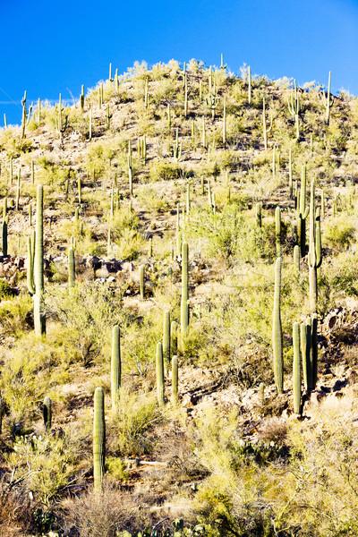 公園 アリゾナ州 米国 風景 砂漠 サボテン ストックフォト © phbcz