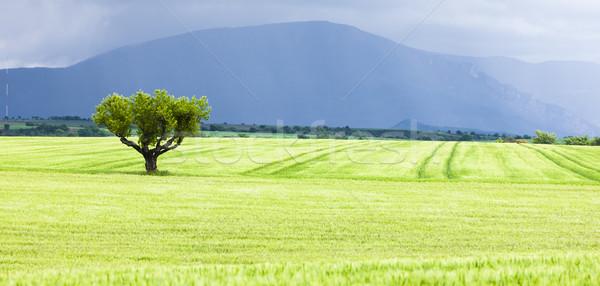 Primavera campo árvore planalto França paisagem Foto stock © phbcz