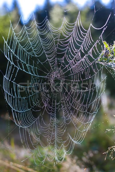 Tela de arana pradera naturaleza Foto stock © phbcz