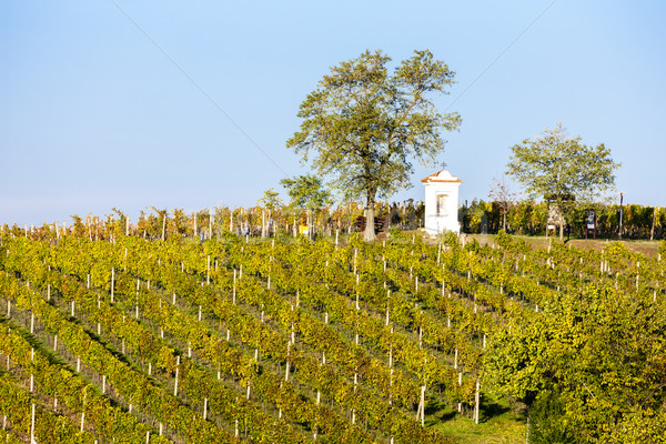 God's torture with autumnal vineyard, Modre Hory, Southern Mora Stock photo © phbcz