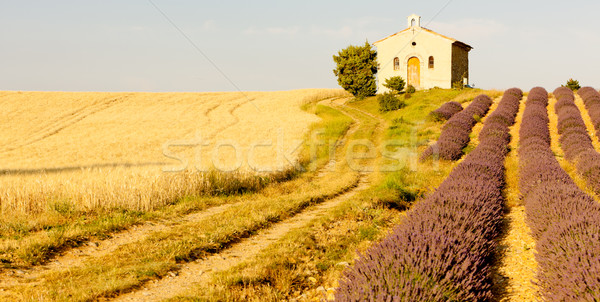 chapel with lavender and grain fields, Plateau de Valensole, Pro Stock photo © phbcz