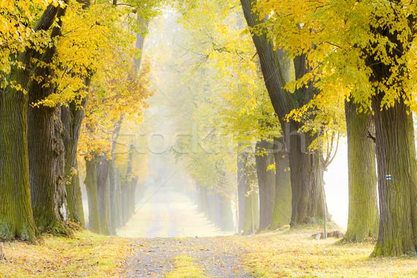 Stok fotoğraf: Sonbahar · geçit · ağaç · sonbahar · bitki · yol