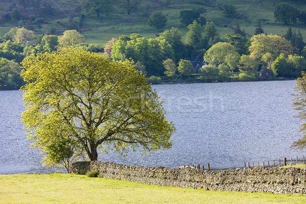 Inglaterra agua árbol paisaje Europa Foto stock © phbcz