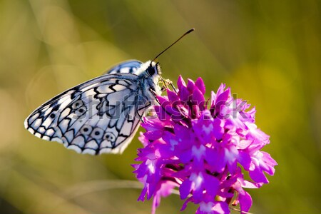 butterfly with flower, D Stock photo © phbcz