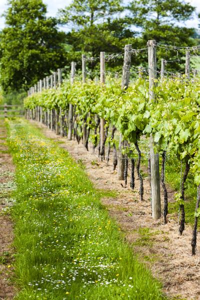 Anglia zöld növény Európa mezőgazdaság kint Stock fotó © phbcz