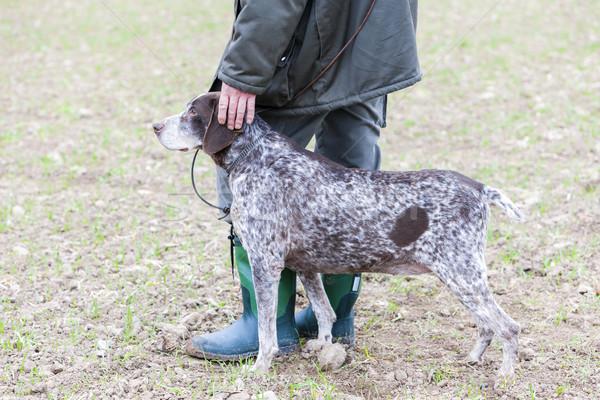 Jachthond jager hond benen recreatie buitenshuis Stockfoto © phbcz