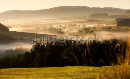 風景 霧 チェコ共和国 森林 秋 ストックフォト © phbcz