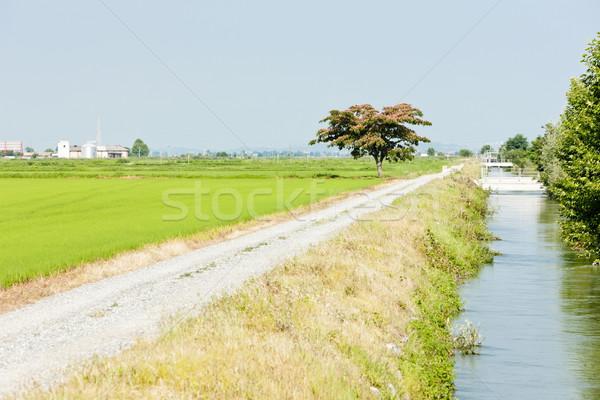 Rijstveld Italië natuur land rijst landbouw Stockfoto © phbcz