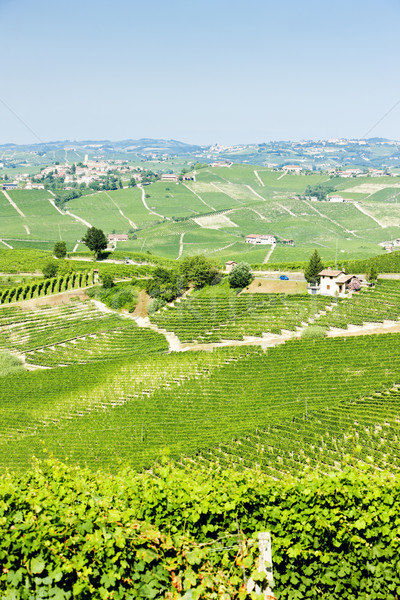 vineyars near Barolo, Piedmont, Italy Stock photo © phbcz