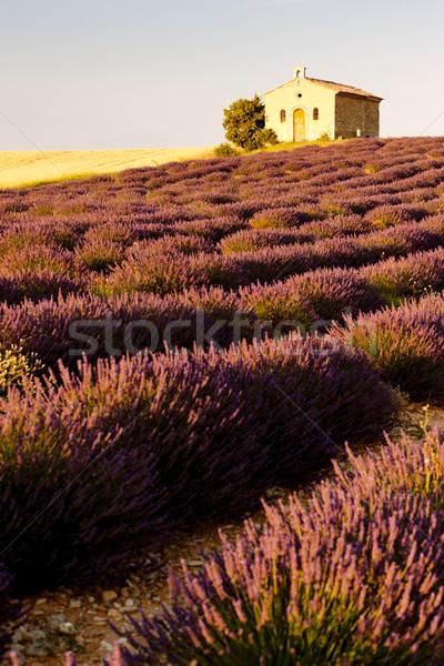 Capela campo de lavanda planalto campo igreja arquitetura Foto stock © phbcz