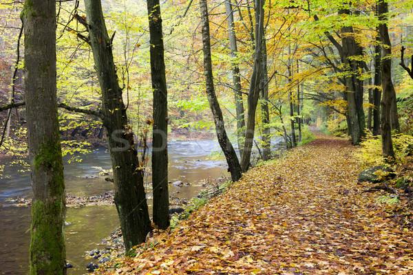 Vadi sonbahar Çek Cumhuriyeti orman doğa yaprak Stok fotoğraf © phbcz